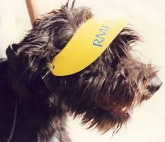 Pies w daszku RMF FM  - Radom